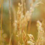 Tutorial: Efecto Lomo en tus fotografías. #Fotografia #Photography