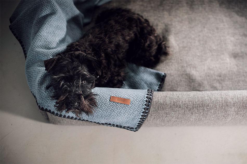 Perro tumbado en una cama Hanniko.