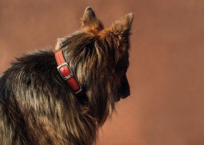 Perro con collar Hanniko