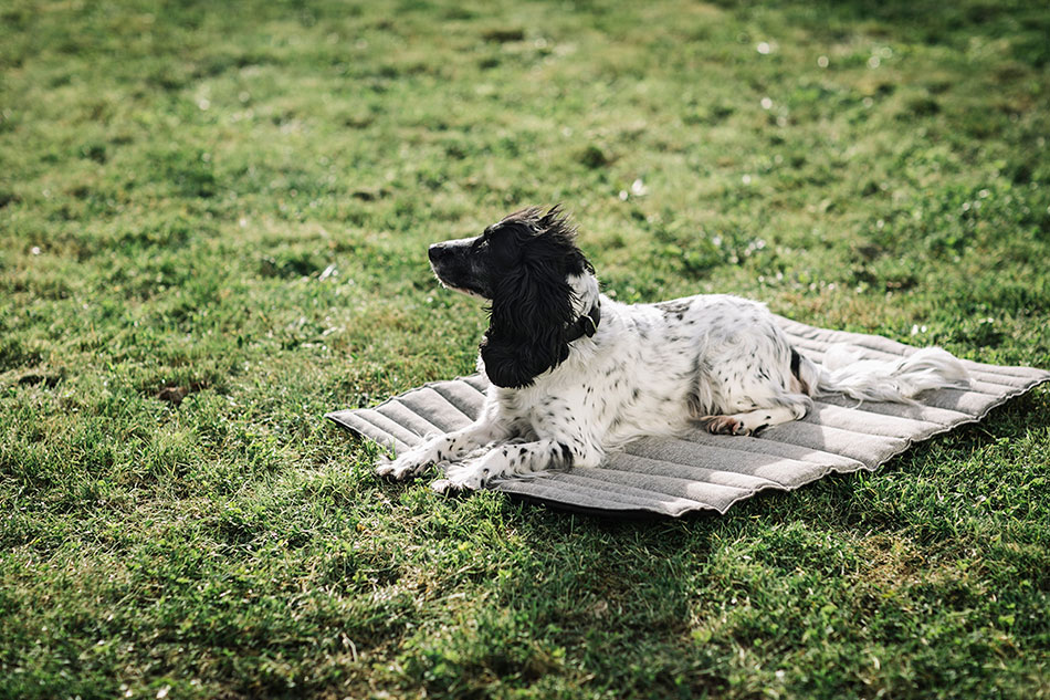 La perra Pantxa sobre la manta de viaje de Hanniko