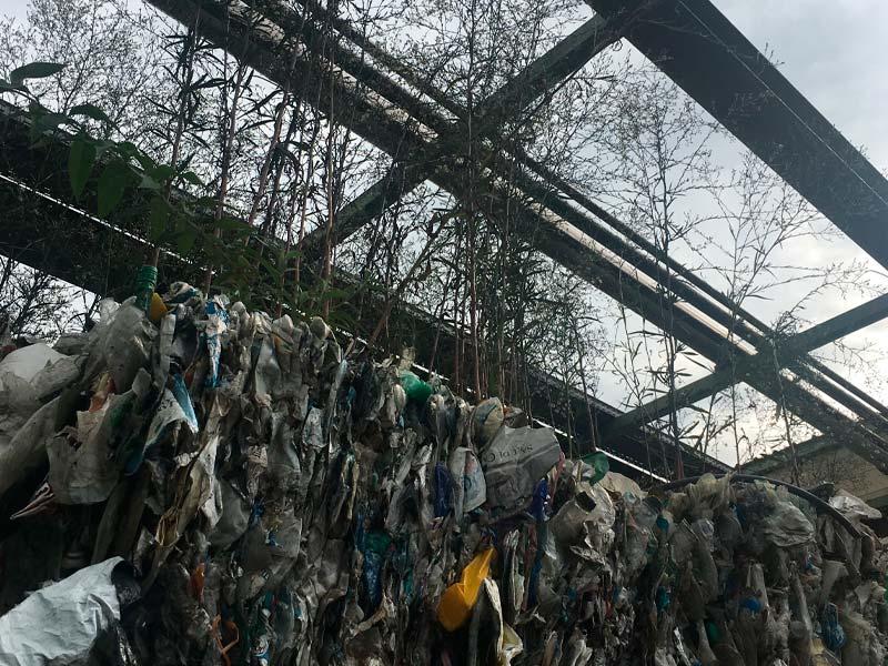 Hasta de los residuos la naturaleza se abre paso